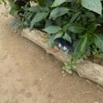 butterfly010
