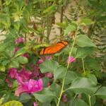 butterfly018