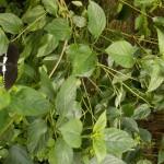 butterfly031