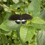 butterfly032