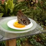butterfly034